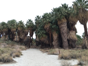 Thousand Palms, Joshua Tree National Park