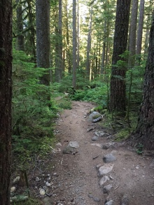 The lovely Wonderland trail to Alice Lake...our morning trail run.